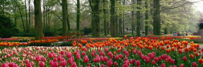 Keukenhof Garden, Lisse, the Netherlands Photographie
