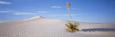 Soaptree Yucca, White Sands National Monument, New Mexico, USA Photographic Print by  Panoramic Images