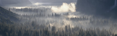 Fog Over the Forest, Yosemite National Park, California, USA Photographic Print by  Panoramic Images
