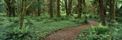 Empty Path in the Rainforest, Olympic National Park, Washington State, USA Photographic Print by  Panoramic Images