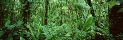 Monteverde Cloud Forest Reserve, Costa Rica Photographic Print by  Panoramic Images