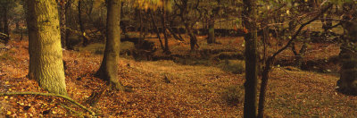 Leaves on the Grass in Autumn, Biller Howe Dale, Yorkshire, England, United Kingdom Photographic Print by  Panoramic Images