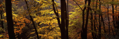 Mid Section View of Trees, Littlebeck, North Yorkshire, England, United Kingdom Photographic Print by  Panoramic Images