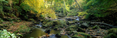 Stream Flowing Through Forest, Eller Beck, England, United Kingdom Photographic Print by  Panoramic Images
