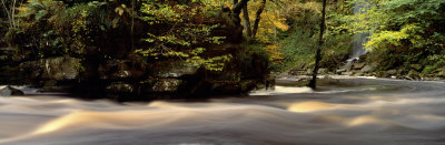 River Flowing Through a Forest, West Beck, Goathland, North Yorkshire, England, United Kingdom Photographic Print by  Panoramic Images