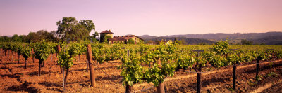 Sattui Winery, Napa Valley, California, USA Photographic Print by  Panoramic Images