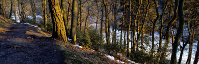 Walkway Passing Through the Forest, Bridgestone Walk, North Yorkshire, England, United Kingdom Photographic Print by  Panoramic Images