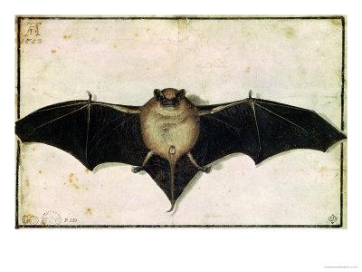 Bat, 1522 Premium Giclee Print by Albrecht Dürer