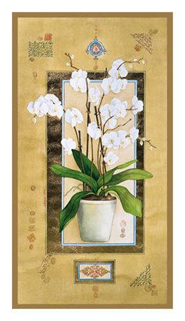Phalaenopsis I Print by Nahid Ghodsi