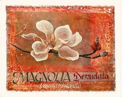 Canvas Magnolia I Prints by Lucinda Foy