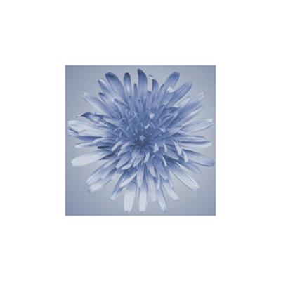 Flora oceánica III Lámina