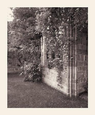 Paul's Backyard II Prints by Ned Witrogen