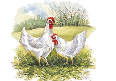 Two Hens in a Field Posters by Peggy Thatch Sibley