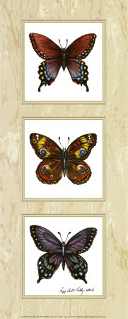 Bright Butterflies Prints by Peggy Thatch Sibley