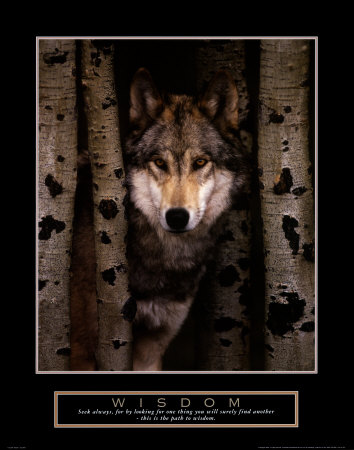 Wisdom: Gray Wolf Konsttryck