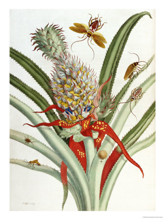 Pineapple (Ananas) with Surinam Insects Giclee Print