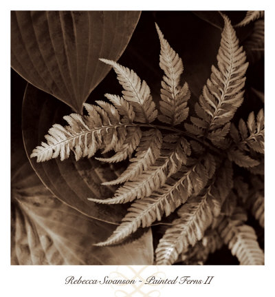 Painted Ferns II Art Print