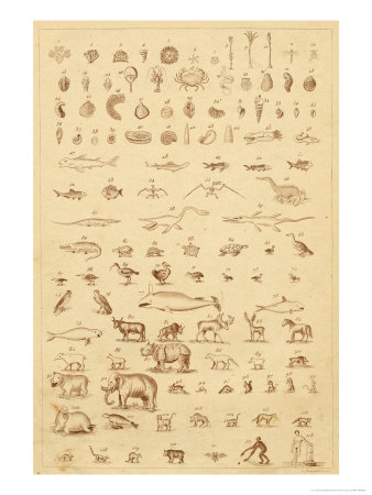 The Progress of Evolution from Amoebas to You and Me as Displayed by the Fossil Record Premium Giclee Print by A. Dusmenil