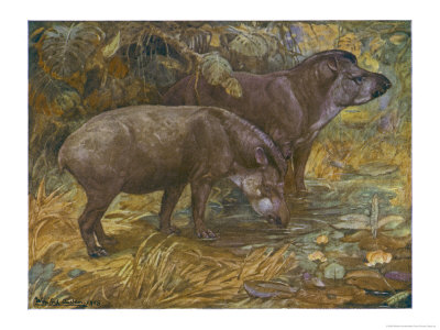 Two American Tapir Giclee Print by Winifred Austen