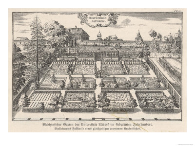 The Herb Garden of Altdorf University Switzerland reproduction procédé giclée
