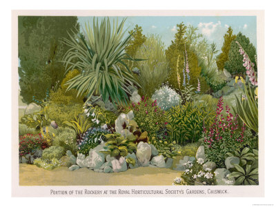 Portion of the Rockery at the Royal Horticultural Society's Gardens Chiswick reproduction procédé giclée