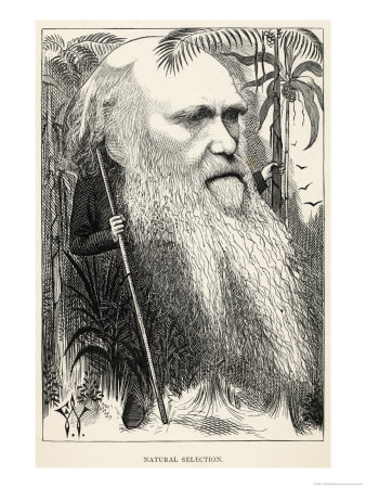 Charles Darwin, Depicted as a Wild Man of the Jungle Giclee Print