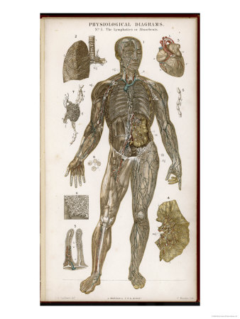 Physiological Diagram of the Lymphatic System Giclee Print