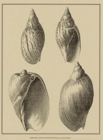 Shells on Khaki XI Prints by Denis Diderot