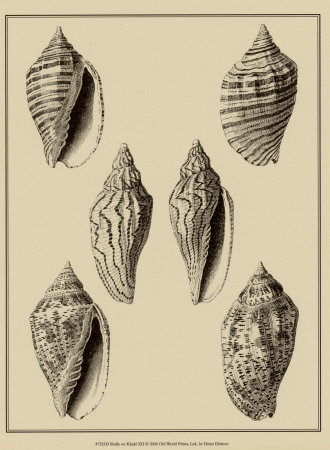 Shells on Khaki XII Posters by Denis Diderot