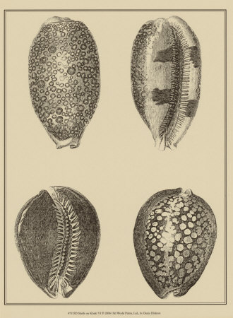 Shells on Khaki VI Posters by Denis Diderot
