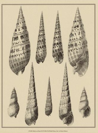 Shells on Khaki IX Prints by Denis Diderot