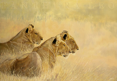 Panthera Leo Print by Danielle Beck