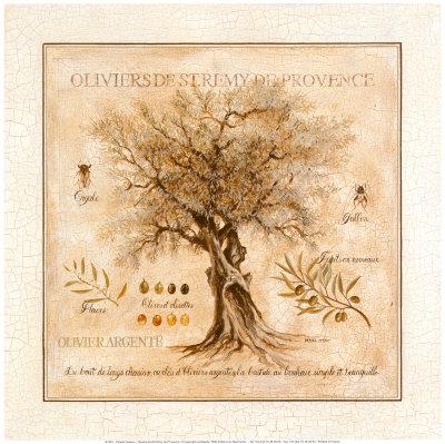 Oliviers de Saint Remy de Provence Prints by Pascal Cessou