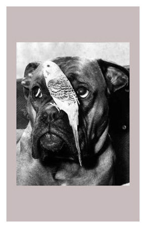Birds Eye View Print