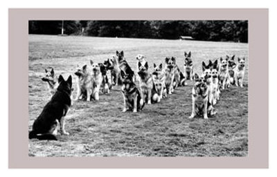 Police Dogs on Parade Posters
