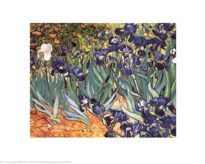 Irises, Saint-Remy, c.1889 Art Print