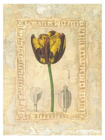 Tulipanes Bessa I Poster by Javier Fuentes