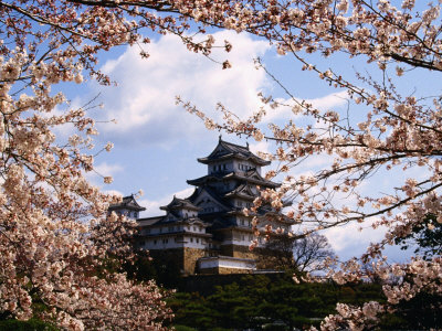 Flor De Japon