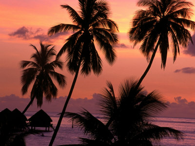 Coconut Trees at Dusk, French Polynesia Photographic Print by Holger Leue