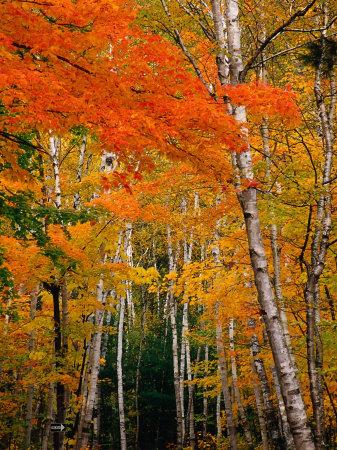 Autumn Foliage, USA Lámina fotográfica por Izzet Keribar