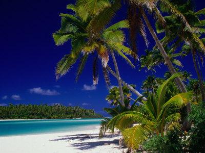 Beach with Palm Trees on Island in Aitutaki Lagoon,Aitutaki,Southern Group, Cook Islands Lámina fotográfica por Dallas Stribley