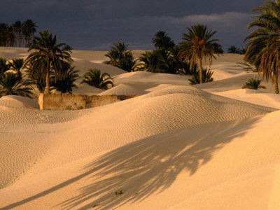 Palm Trees and Sand Dunes, Douz, Tunisia Photographic Print