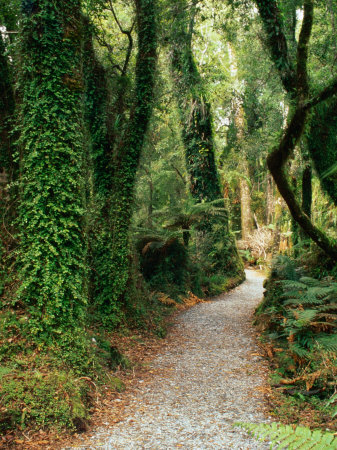 Walking Track to Ship Creek, New Zealand Photographic Print