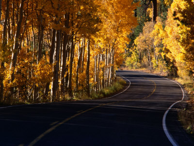 Aspens in Autumn on Road Around June Lake Loop, Eastern Sierra Nevada, June Lake, USA Photographic Print by Nicholas Pavloff