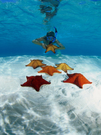 Snorkeller Looking at Cusion Sea Stars Near Marsh Harbour, Marsh Harbour, Bahamas Photographic Print by Michael Lawrence