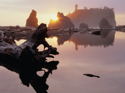 Drift Logs and Sea Stacks at Dusk, Olympic National Park, USA Photographic Print by Nicholas Pavloff