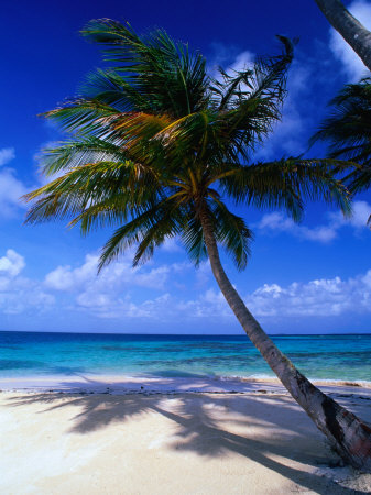 A Palm Tree Bends to the Caribbean Sea on a Key in the San Blas Islands, San Blas, Panama Fotografie-Druck