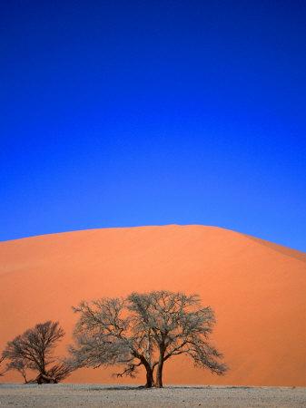 Tree and Sand Dune, Namib Desert Park, Namibia Photographic Print by David Wall