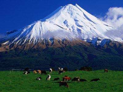 Cattle Graze Beneath the Dormant Volcano Mt. Taranaki, or Egmont, Taranaki, New Zealand Photographic Print by David Wall