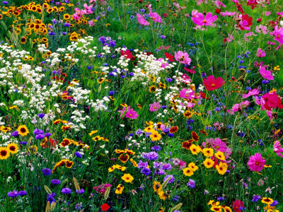 i-anson-richard-colourful-wildflowers-usa.jpg
